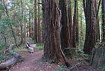 Hiker on bench in Forest of Nisene Marks