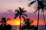 Sunset over the Pacific Ocean through palm trees at Hapuna Beach, Kohala Coast, The Big Island, Hawaii USA