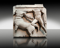 Sculpture of Lapiths and  Centaurs battling from the Metope of the Parthenon on the Acropolis of Athens No III. Also known as the Elgin marbles. British Museum London.