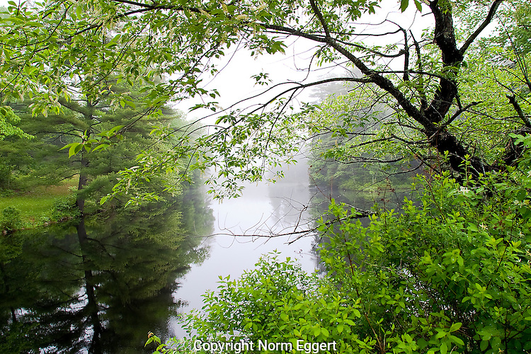 Foggy Summer Day at the East Branch of the Swift River