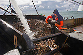 Fisherman sorting catch from a Dutch fishing vessel on the North Sea