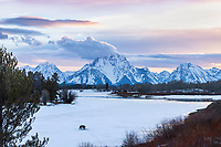 Grizzly at Oxbow Bend in Grand Teton National Park at sunset