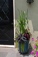 Sweet potato vine, coleus, Lysimachia in tall ceramic planter pot container, petunias, back door of house