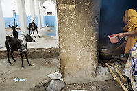 Djibouti. Tadjourah province. Tadjourah. Centre médico hospitalier (CMH). Hospital. The association Mouhabani takes care of all the food preparation and gives a nutritional support to patients with HIV Aids and tuberculosis diseases. A black muslim woman, wearing a veil on her head, is cooking the meal on fire. Three goats. The Global Fund through the djiboutian Ministry of Health supports the association with an Aids grant (financial aid).  © 2006 Didier Ruef