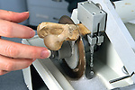 Cutting Turtle Bone