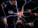 Network of neurons, Brain cells, scientific conceptual 3D illustration
