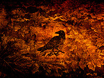 A raven in leaves