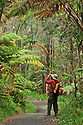 Hiker on trail taking photographs in tree fern-ohia rainforest near Thurston Lava Tube; Hawaii Volcanoes National Park..
