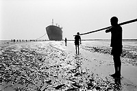 India. Province of Gujarat. Alang. Workers, all men, carry a wire to draw by winch a huge scrap's piece on the beach. Ships aground. Vessels stranded. Bottoms of ships at low tide on the shore. Alang, located in the Gulf of Khambhat, is a ships breaking place and is considered as the biggest scrapyard in the world. Ships recycling for its metals. Environmental issues. Hazardous waste. © 1992 Didier Ruef