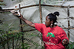 AMANI NATURE RESERVE, TANZANIA - NOVEMBER 14: Veroniqa Simon feeds her butterflies on November 14, 2009 in Amani Nature Reserve, Tanzania. Locals have worked since 2004 to preserve this unique rainforest together with Tanzania Forest Conservation Group. The main purpose has been to preserve the rich biological life in the forest and to stop illegal logging and the cutting of trees by villagers for firewood. Many villagers has started income generating programs such as bee keeping, butterfly farms and different spices. Many women have especially been empowered by these projects such as Veroniqa Simon. She also farm fish and bees. (Photo by Per-Anders Pettersson)...