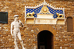 Palazzio Vecchio - Statue of David and Front door - Piazza Della Signora - Florence  - Italy