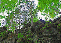 Clifton Gorge Nature Preserve, Clifton, Ohio<br />