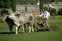 India, Uttar Pradesh, Taj Mahal, mowing lawn using cows.