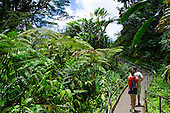 A couple on the trail in 'Akaka Falls State Park near large hapu'u ferns, Big Island of Hawai'i