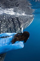 RX2704-D. Whale Shark (Rhincodon typus) swimming just under the surface feeding on plankton while woman (model released) swims alongside the 7 meter long gentle giant. Gulf of Mexico, Mexico, Caribbean Sea.<br /> Photo Copyright &copy; Brandon Cole. All rights reserved worldwide.  www.brandoncole.com