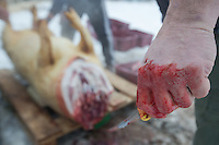 Butcher holds a knife in his bloody hand during a Pig killing in Hungary and meat processing event in Pomaz (about 20 kilometres North of capital city Budapest), Hungary on January 28, 2017. ATTILA VOLGYI