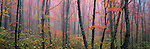 Please call 888-973-0011 or email info@artwolfe.com to license this image or purchase a limited edition print. <br />
