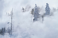 Frost and steam during winter at Mud Volcano Thermal Area in Yellowstone