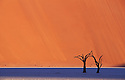 Dead acacia trees in Dead Vlei; Namib-Naukluft National Park, Namib Desert, Namibia