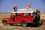 Safari traveler photographing cheetah, Masai Mara National Reserve, Kenya