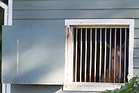 Tennessee Walking Horse slideshow