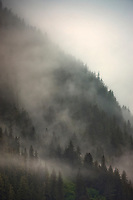 Fog and mist in the Chugach National Forest, Unakwik Inlet, Prince William Sound, Alaska.