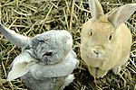 Buddha Bunnies! Bunny Photos. Marc Caryl Nature Photos.
