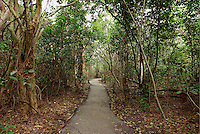 The Gumbo Limbo trail through tropical forest in Everglades National Park, Florida.