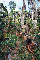 Slash-and-burn agriculture by Indians of Guiana Highlands of Venezuela: woman and girl harvesting sweet potatoes; banana plants at upper left