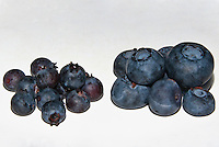 Blueberry Wild &amp; Cultivated Side by Side comparison