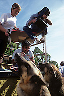California, Los Angeles, 1982. American animal trainer Moe Di Sesso transforming the most diverse animals into cinema stars. Among his successes, the famous German Shepherd, Rin Tin Tin. Moe Di Sesso with his trained dogs during an action shot. He died in Newhall, CA, in 2007 at age 83.