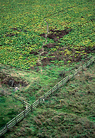 Farm land, Ipswich, England 1994