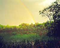 Rainbow over forest, Cleaveland Farm State Forest, Massachusetts