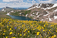 Shoshone National Forest Wyoming, wildflowers and lake along the Beartooth Highway