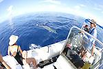 EW Team & Blainville's Beaked Whale