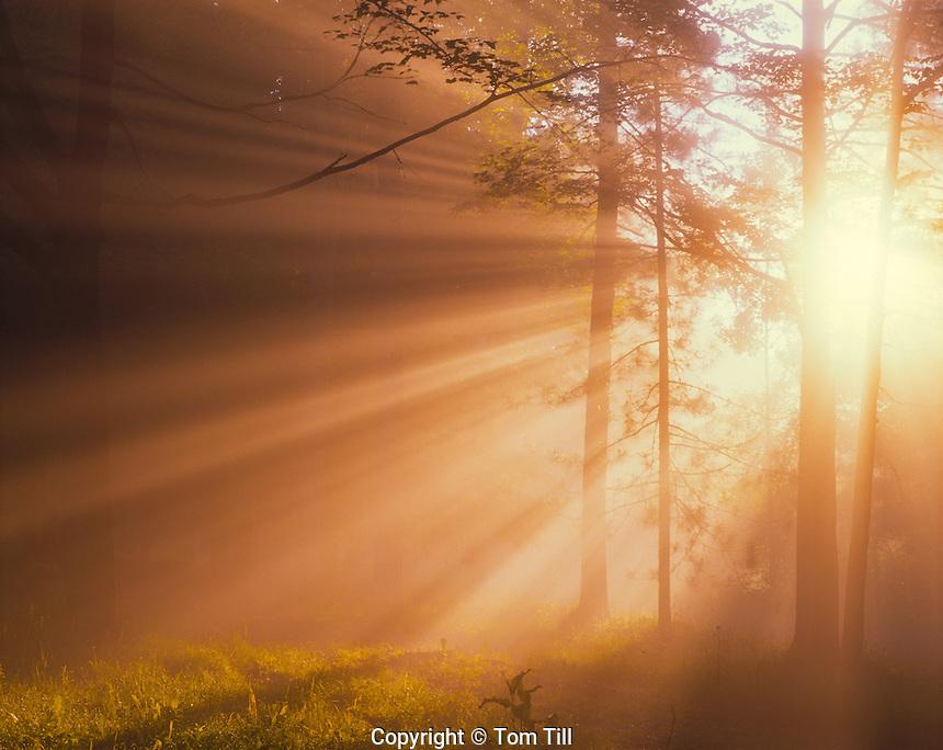 Morning fog, Delaware Water Gap National Recreation Area, New Jersey   Appalachian Mountains