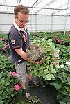 Foto: VidiPhoto<br /> <br /> POEDEROIJEN - Potplantenkweker Teunis Versteeg uit Poederoijen in de Bommelerwaard toont de wortelgroei van een grote maat pothortensia.