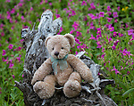 A stuffed teddy bear sits on a log in Yellowstone.