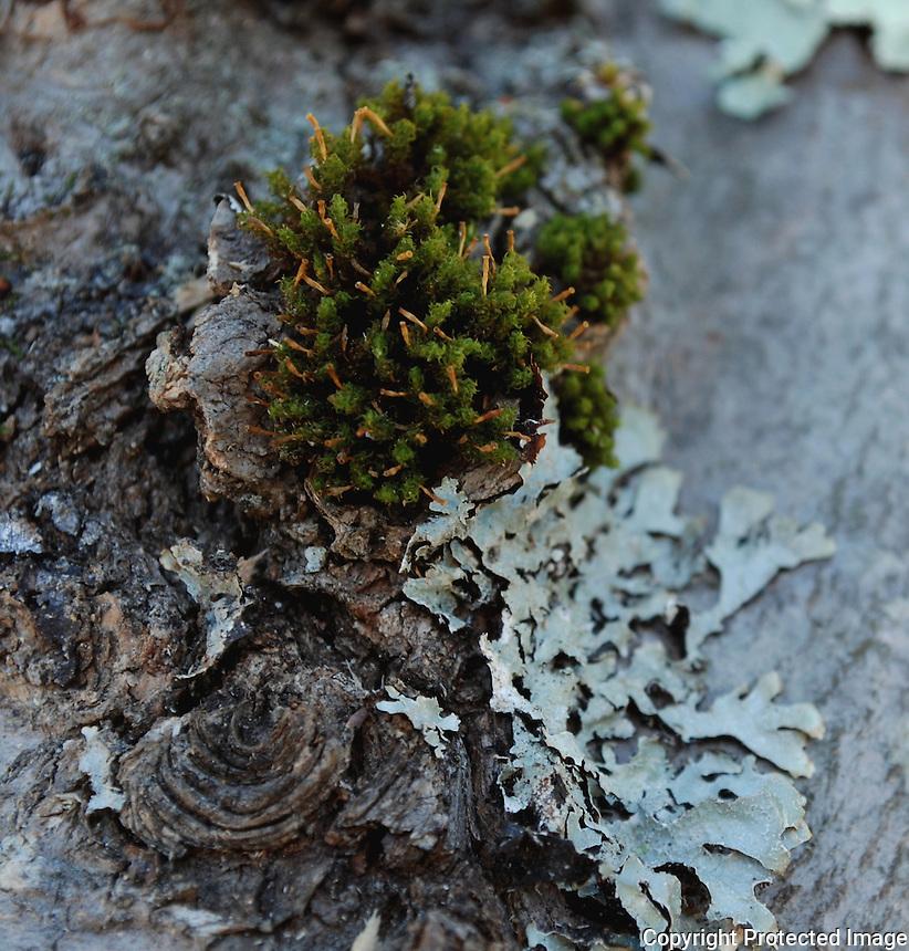 Mini ecosystem on tree bark.