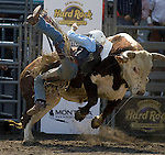 Jake Wade, from Almono, N.M. is bucked off Little Johnny during the Xtreme Bull Riding Competition at the Kitsap County Fair and Stampede  held Aug. 26 to Aug. 30, 2009 in Silverdale, WA. Jim Bryant Photo. All Rights Reserved. © 2009