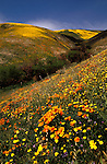 California, Mojave Desert: Spring landscape of wildflowers in hills west of Lancaster at Gorman..  Photo cadea2102..Photo copyright Lee Foster, 510/549-2202, lee@fostertravel.com, www.fostertravel.com