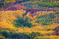 The hills above Catamount Lake are ablaze with color at the height of autumn.Catamount Lake is located just outside the town of Steamboat Springs in northwest  Colorado's spectacular Yampa Valley.
