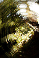 4 August 2006: Spinning art of trees in a forest along Highway 1 through central California along the coast of Big Sur. Graphic, art, texture, book.