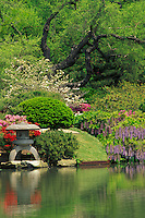 Lush blooms of spring wysteria, azaleas, dogwood and pear are vivid against the the green leaves and reflected in the water near the bridge