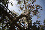 A canopy walkway leads to a viewing tower at the Myakka River State Park in Florida.