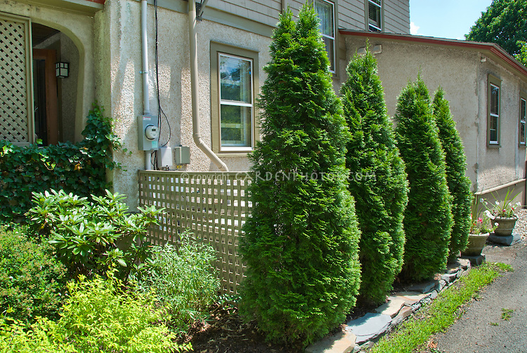 Hiding the air conditioning with privacy shrubs evergreens next to images frompo - Shrubbery for privacy ...