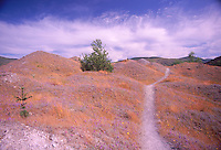 Trail Through Hummocks, Mt. St. Helens National Volcanic Monument, Washington, US