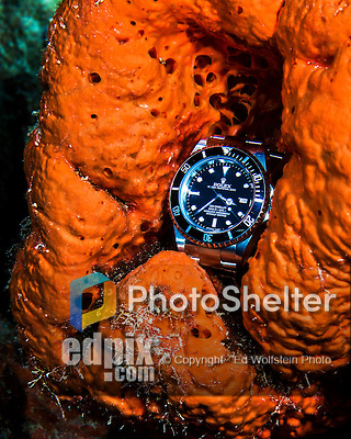 28 January 2016: A Rolex Sea-Dweller dive watch rests on an orange sponge in 40 feet of water at Captain Don's Habitat in Bonaire. Bonaire is known for its pioneering role in the preservation of the marine environment. A part of the Netherland Caribbean Islands, Bonaire is located off the coast of Venezuela and offers excellent scuba diving, snorkeling and windsurfing.  Mandatory Credit: Ed Wolfstein Photo *** RAW (NEF) Image File Available ***