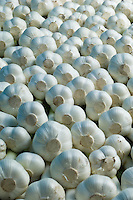 close up of many cloves of elephant garlic