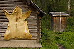 Bear skin stretched and drying on log cabin wall, outhouse behind in the historic gold-rush era restored ghost town of Barkerville in Cariboo gold district of British Columbia
